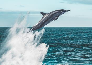 Robot Dolphins: The cruelty-free 'animal' you can't differentiate from the real.